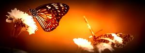 evolution-of-energy-healing-large-web